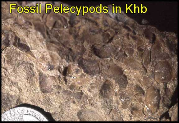 clam fossils